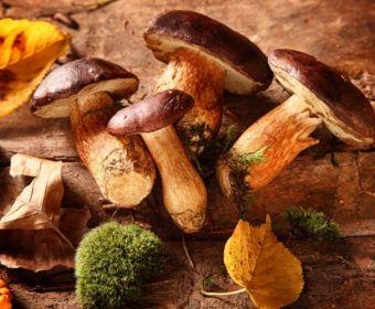 معرفی انواع قارچ های خوراکی و سمی
